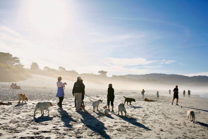 Carmel City Beach, Carmel-by-the-Sea, California