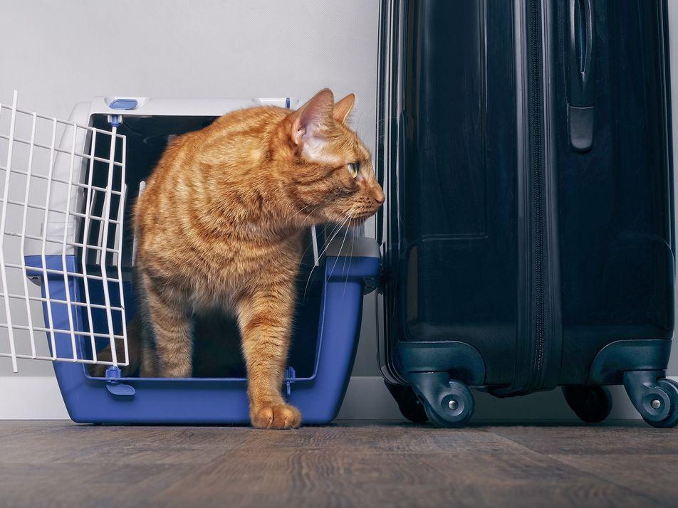 Cómo viajar en avión con tu mascota