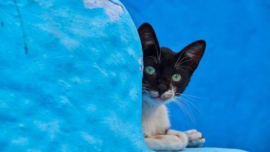 Gatos callejeros del mundo