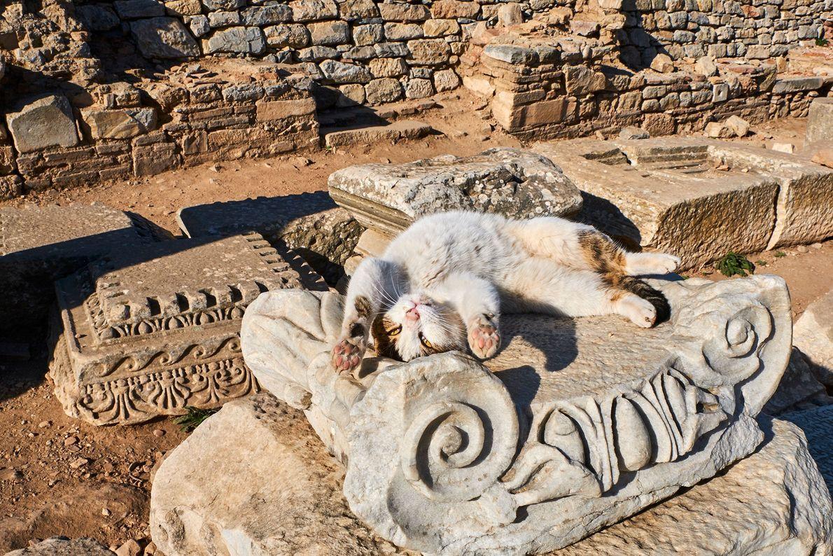 Un gato juguetón se estira al sol entre ruinas turcas. El islam es la religión predominante ...