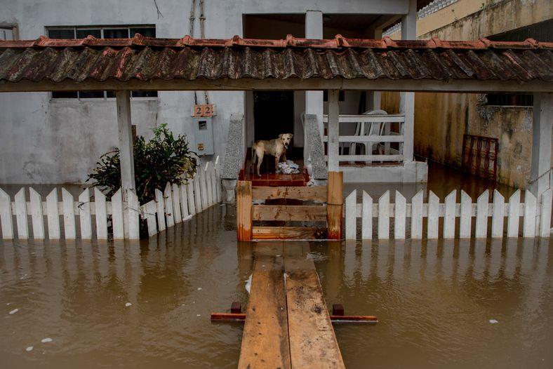 Los habitantes de la ciudad de Careiro da Várzea, municipio del Estado de Amazonas, tuvieron que ...
