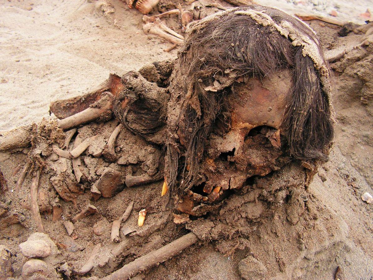 Tanto los niños como las llamas fueron traídos a la costa desde rincones remotos del Imperio ...