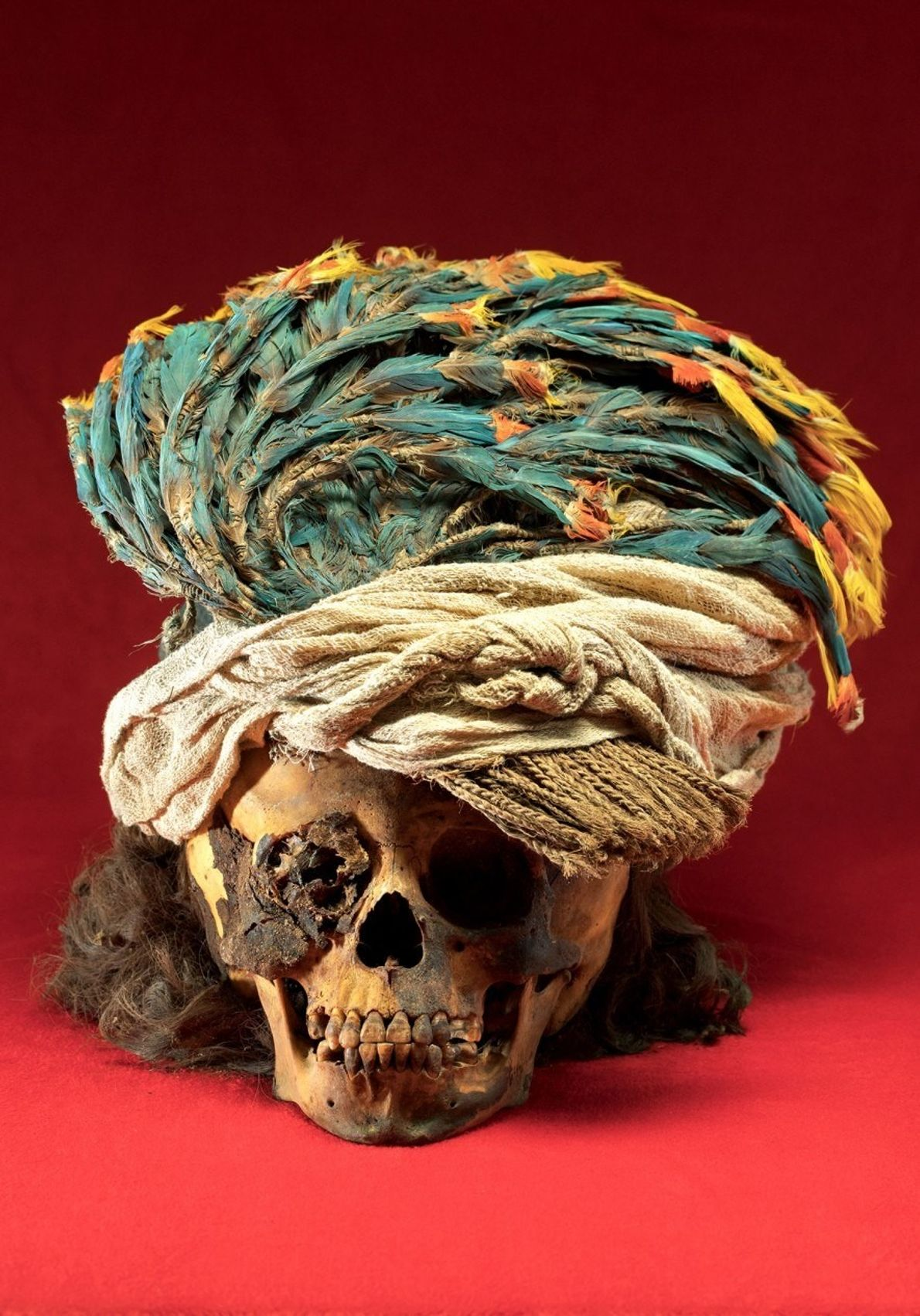 Un tocado de plumas de guacamayo adorna el cráneo de un niño sacrificado con pelo hasta ...