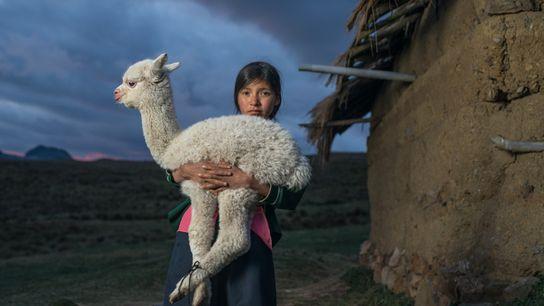 Danila, de 14 años, sostiene una cría de alpaca cerca de Huaylillas, en las tierras altas ...