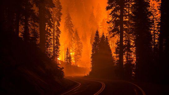 El incendio Creek, en el Bosque Nacional Sierra de California, ha destruido cientos de miles de ...