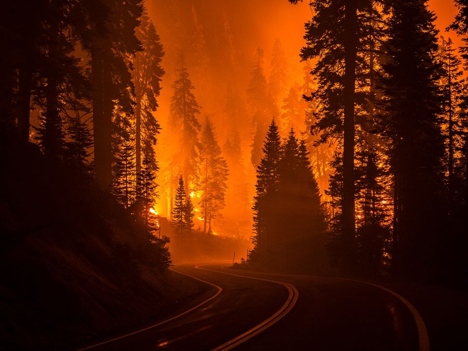 ¿Cuál es la relación entre los incendios forestales y el cambio climático?