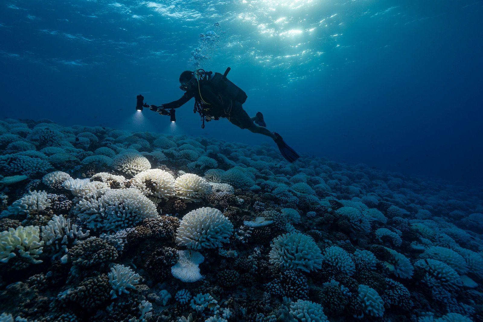 """El cambio climático conduce al planeta hacia un """"punto crítico"""" peligroso"""