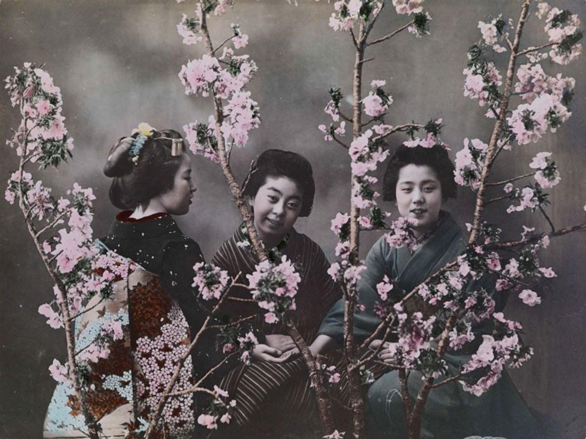 Tres mujeres japonesas vestidas con kimonos tradicionales posan detrás de cerezos en flor.