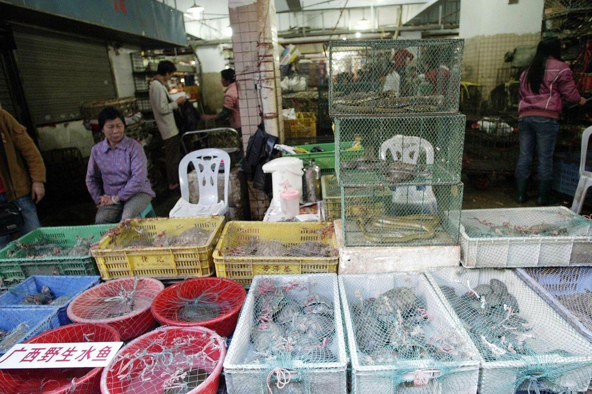 Mientras la OMS declara la emergencia por el coronavirus, cada vez más chinos quieren prohibir los ...