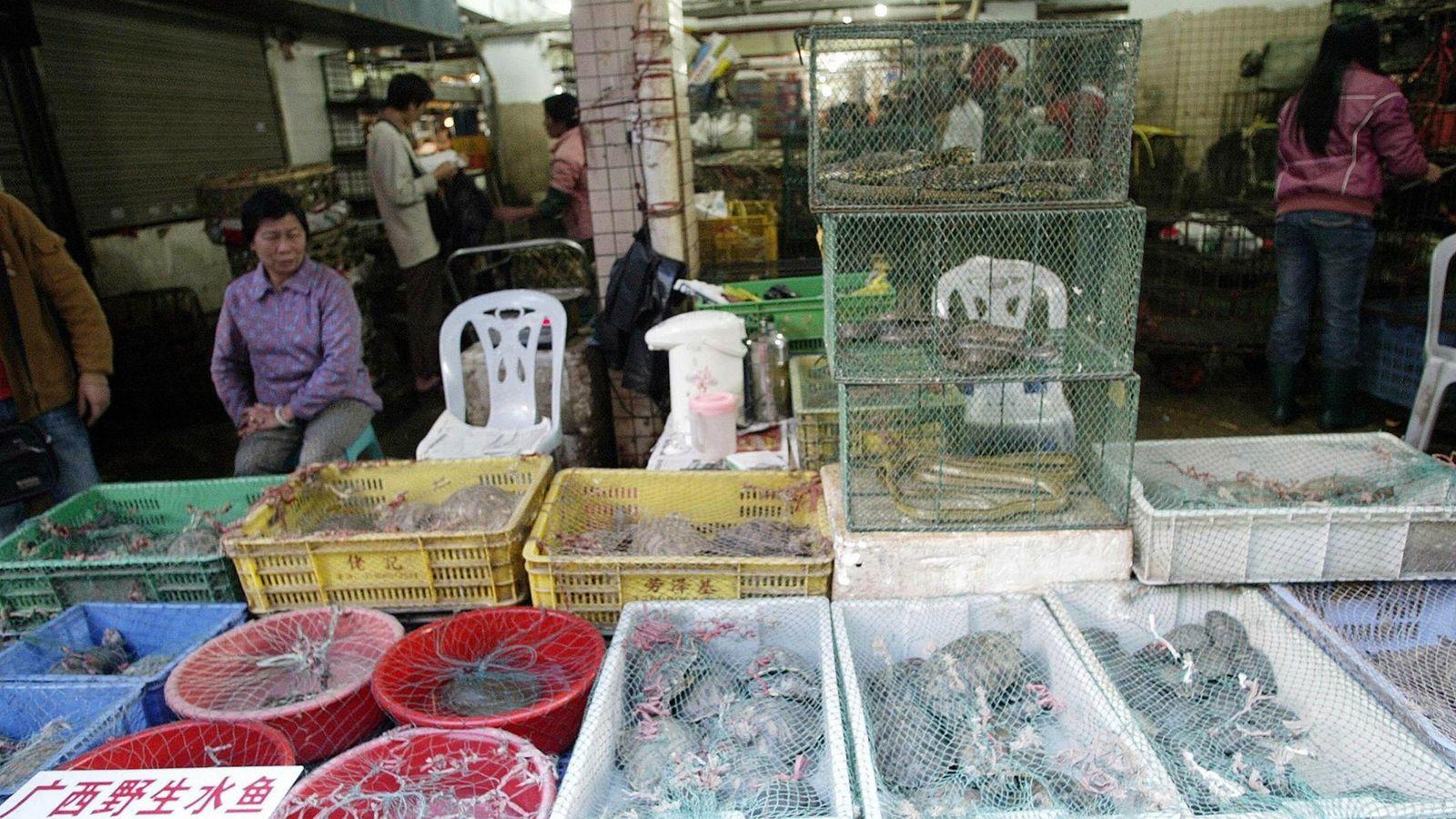 En un mercado de vida silvestre en Shenzhen, los vendedores exponen reptiles vivos y mamíferos para ...