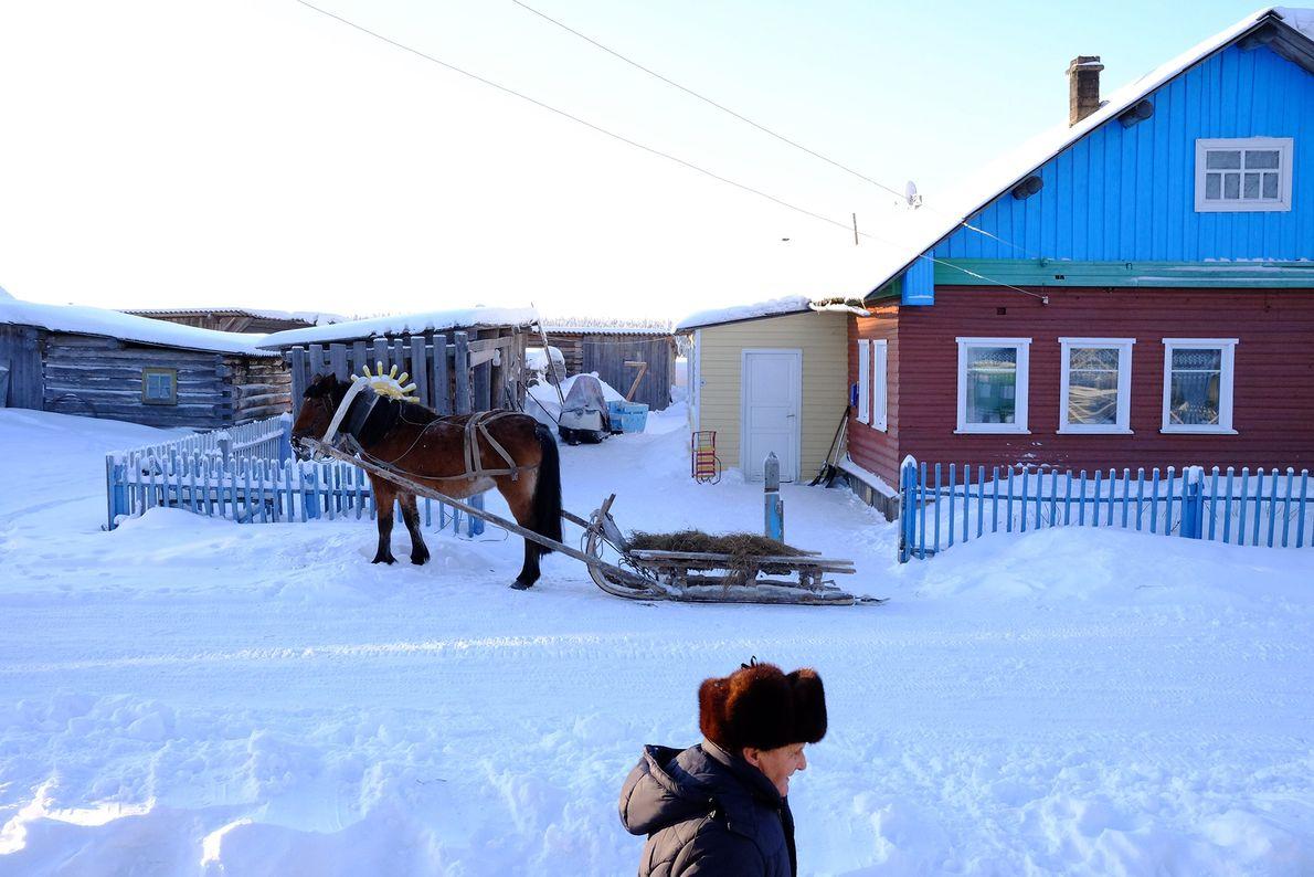 La economía del pueblo de Sovpolie se basa en la venta de caballos. La raza de ...