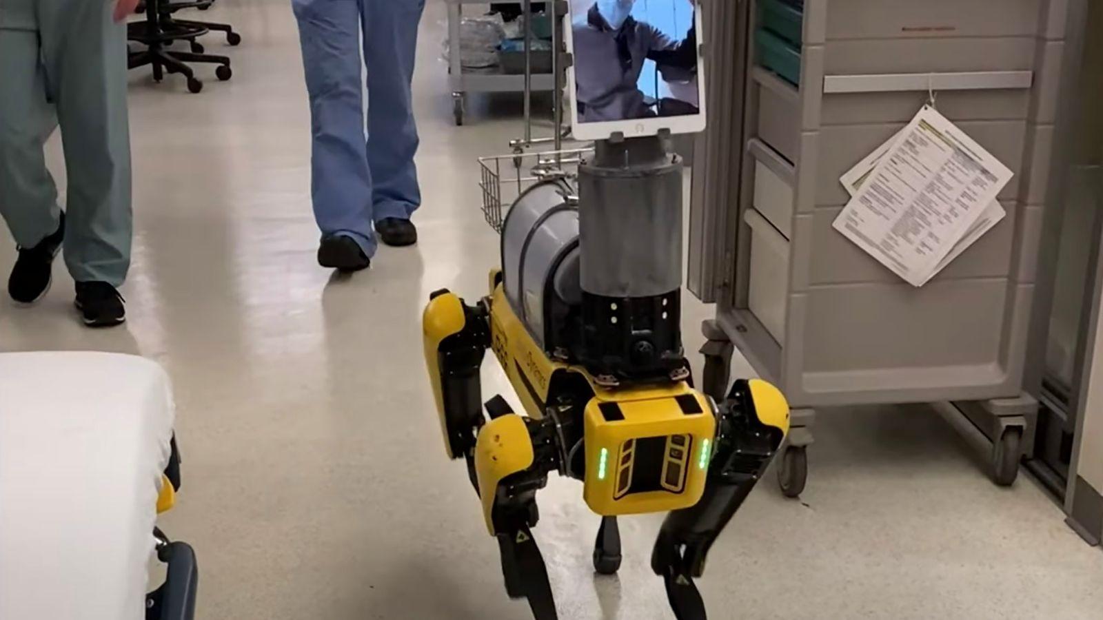 Spot, un robot con forma de perro desarrollado por Boston Dynamics, permite a los trabajadores de ...