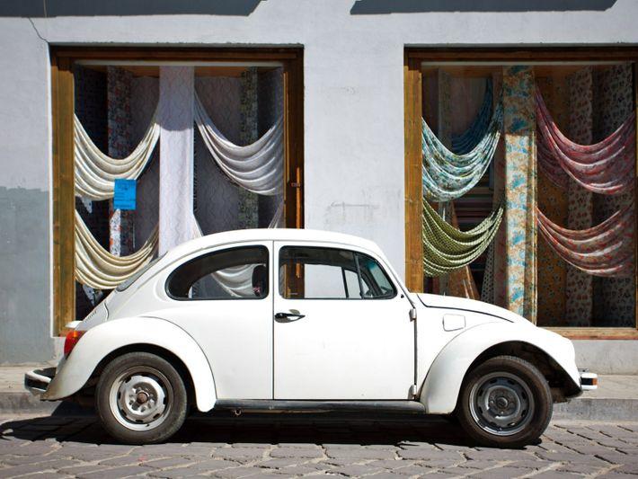 Oaxaca Bug-White2
