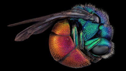 Sorpréndete con estas impresionantes fotos microscópicas