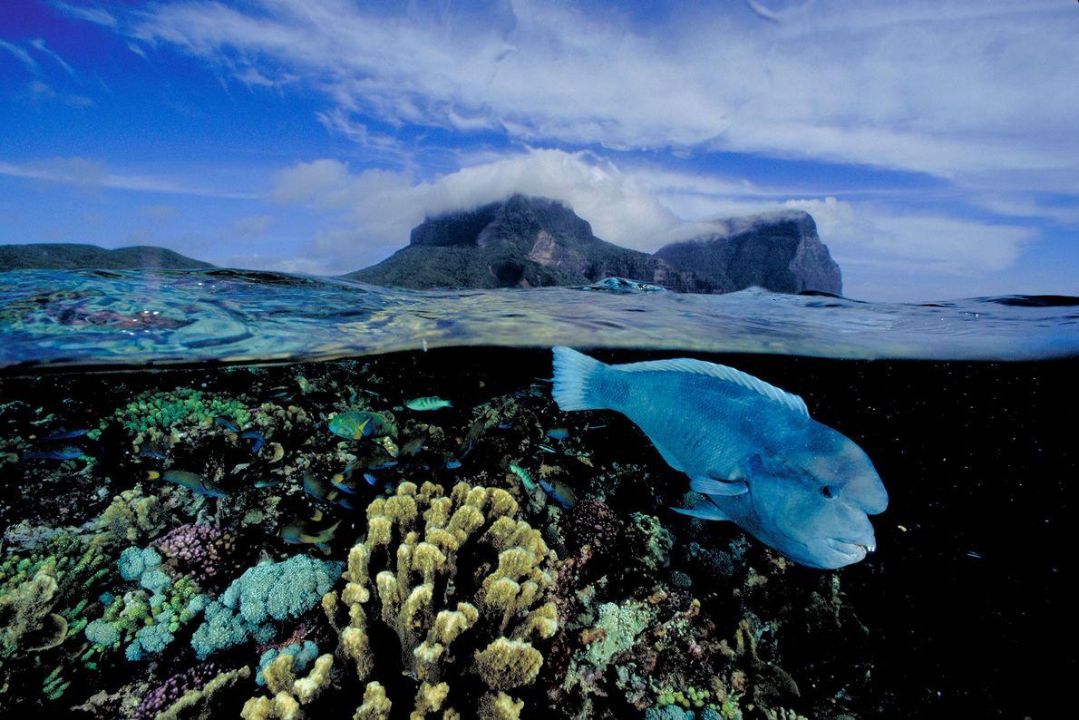 Los picos volcánicos erosionados se elevan sobre un pez napoleón que nada por el arrecife de ...