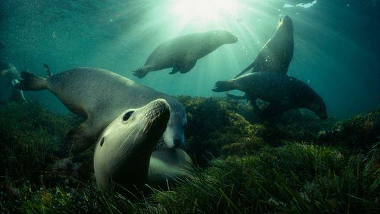 Imágenes impresionantes de toda una carrera bajo el agua