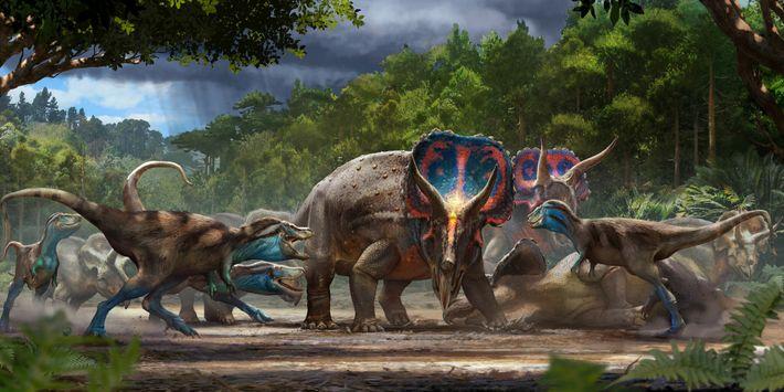 """El fósil """"Dinosaurios en duelo"""" puede interpretarse como una lucha letal entre un Triceratops y un T.rex joven, ..."""