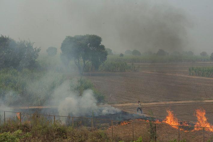 Las juntas de control de la contaminación en todo el norte de la India están monitoreando ...
