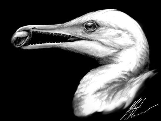 Descubren ave de la era de los dinosaurios con cráneo increíblemente intacto