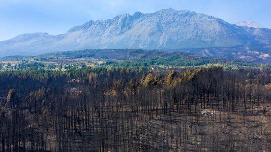 La Patagonia argentina en llamas: resurgir de las cenizas