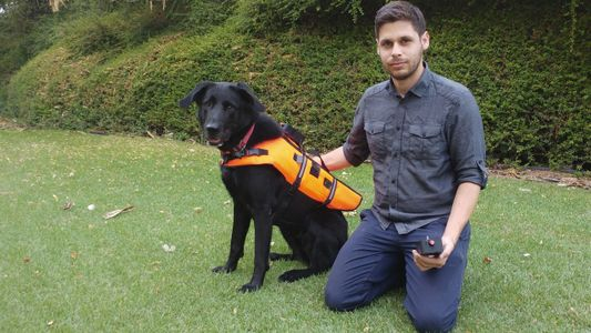 Mira cómo responde un perro a órdenes no verbales con este chaleco vibrador