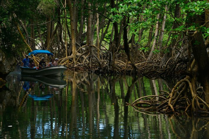 Una excursión en bote recorre los manglares en el Parque Nacional Los Haitises, al que se ...
