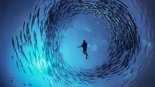 Conoce al maestro de la fotografía en su misión por ayudar a ver el mar