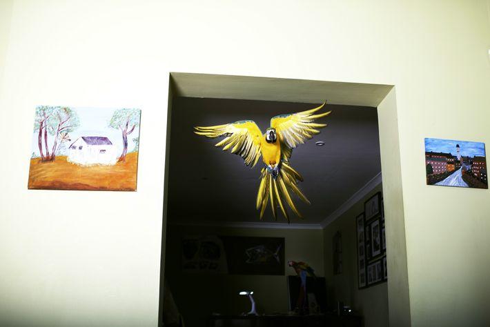 Max vuela como un rayo de habitación en habitación como parte de su rutina diaria en ...