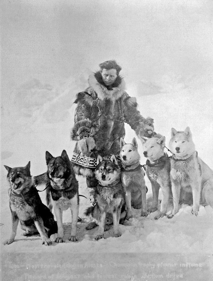 Leonhard Seppala con sus perros de trineo, ca. 1925. Togo (extremo izq.) y Seppala son los ...
