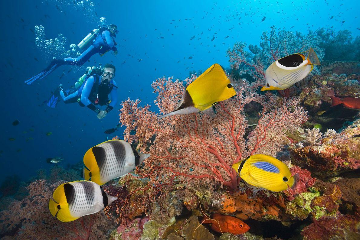 Dos buceadores exploran la Gran Barrera de Coral, ubicada en el Océano Pacífico Sur. Desde 2016, ...