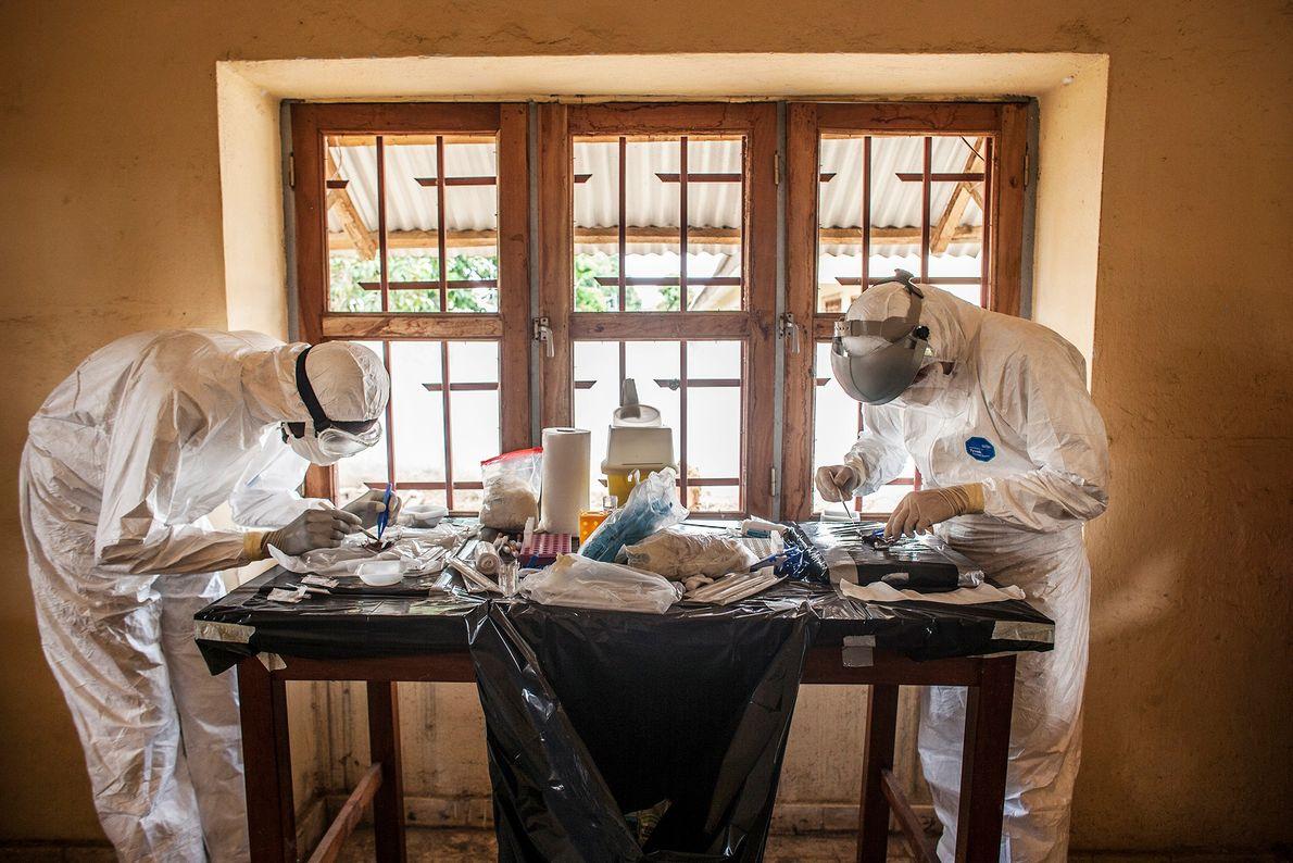Dos médicos realizan necropsias en murciélagos en un laboratorio improvisado.