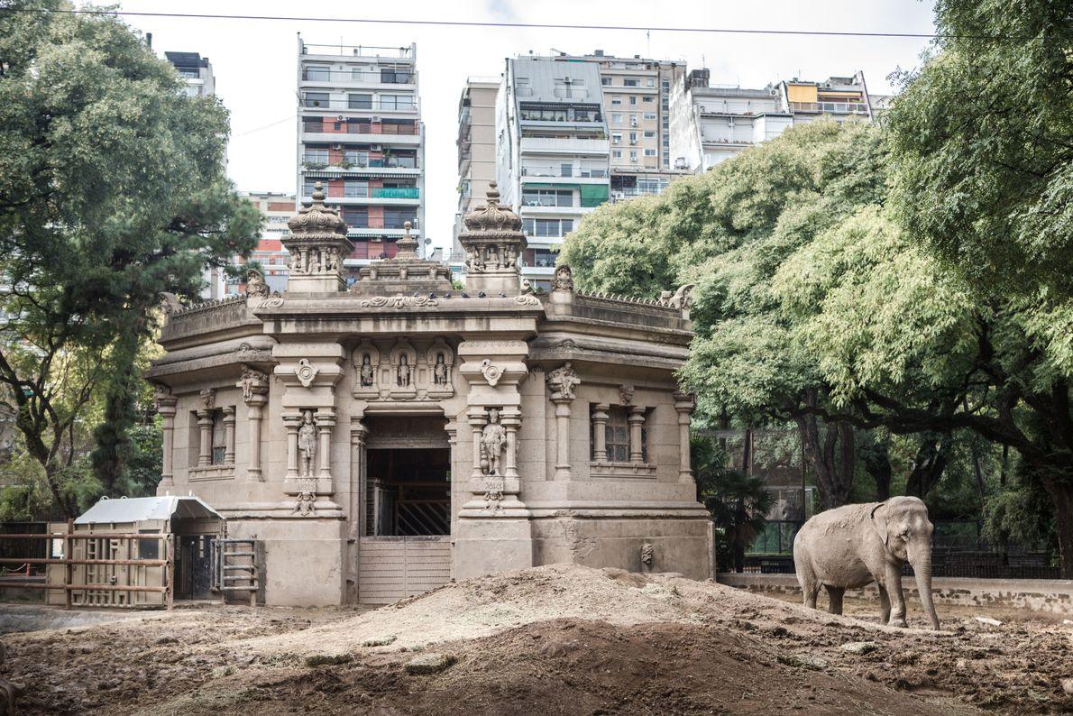 traslado-elefanta-mara-32