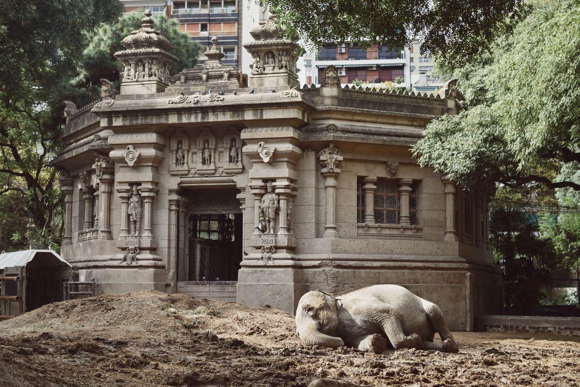 mara-elefante-ecoparque-recinto