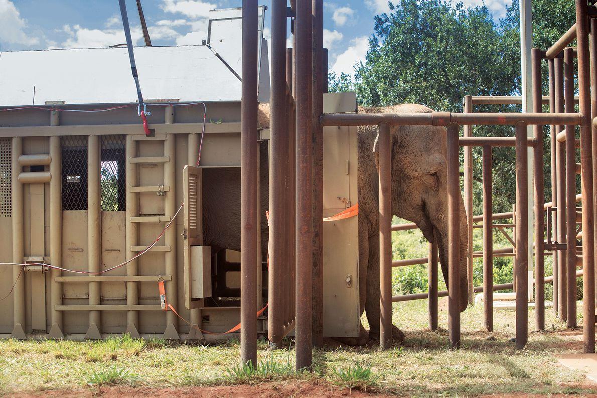traslado-elefante-mara-sofialopezmanan16