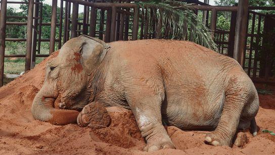 traslado-elefanta-mara-sofialopezmanan16b