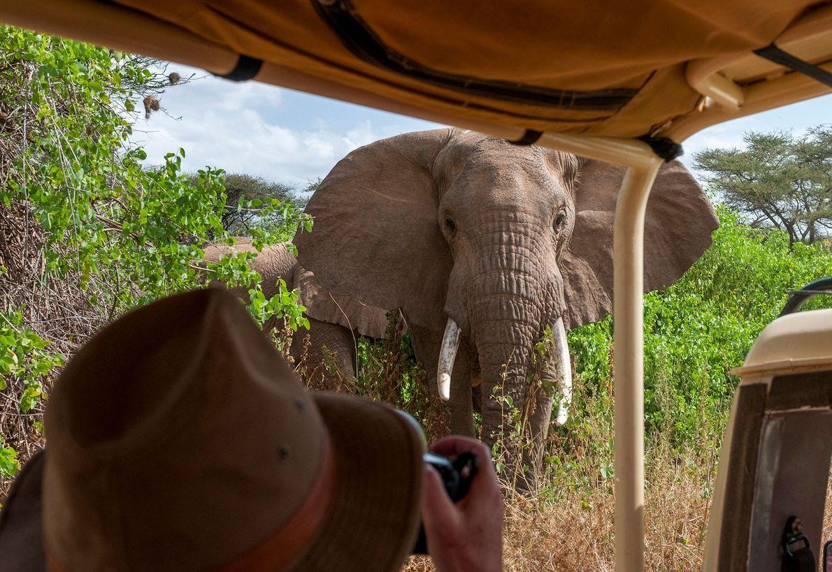 Un elefante se aproxima a un fotógrafo de vida silvestre al interior de la Reserva Nacional ...