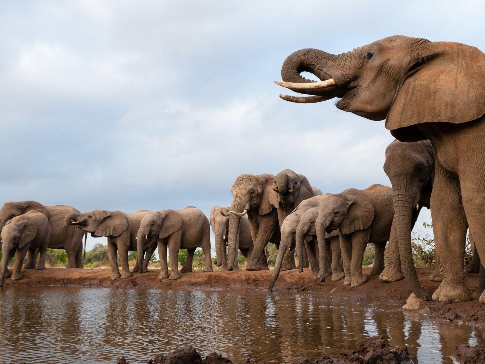 En los últimos meses, cientos de elefantes han muerto por causas desconocidas en Botswana.