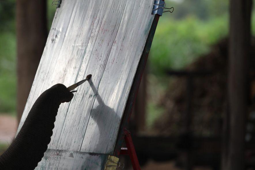 Un elefante practica pintura en Ban Ta Klang. Pintar es uno de los trucos más comunes ...