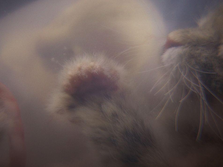 Curiosidades asombrosas sobre el embarazo de algunos animales