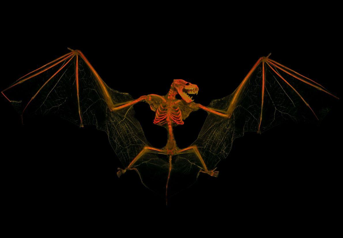 vertebrate-skeletons-13