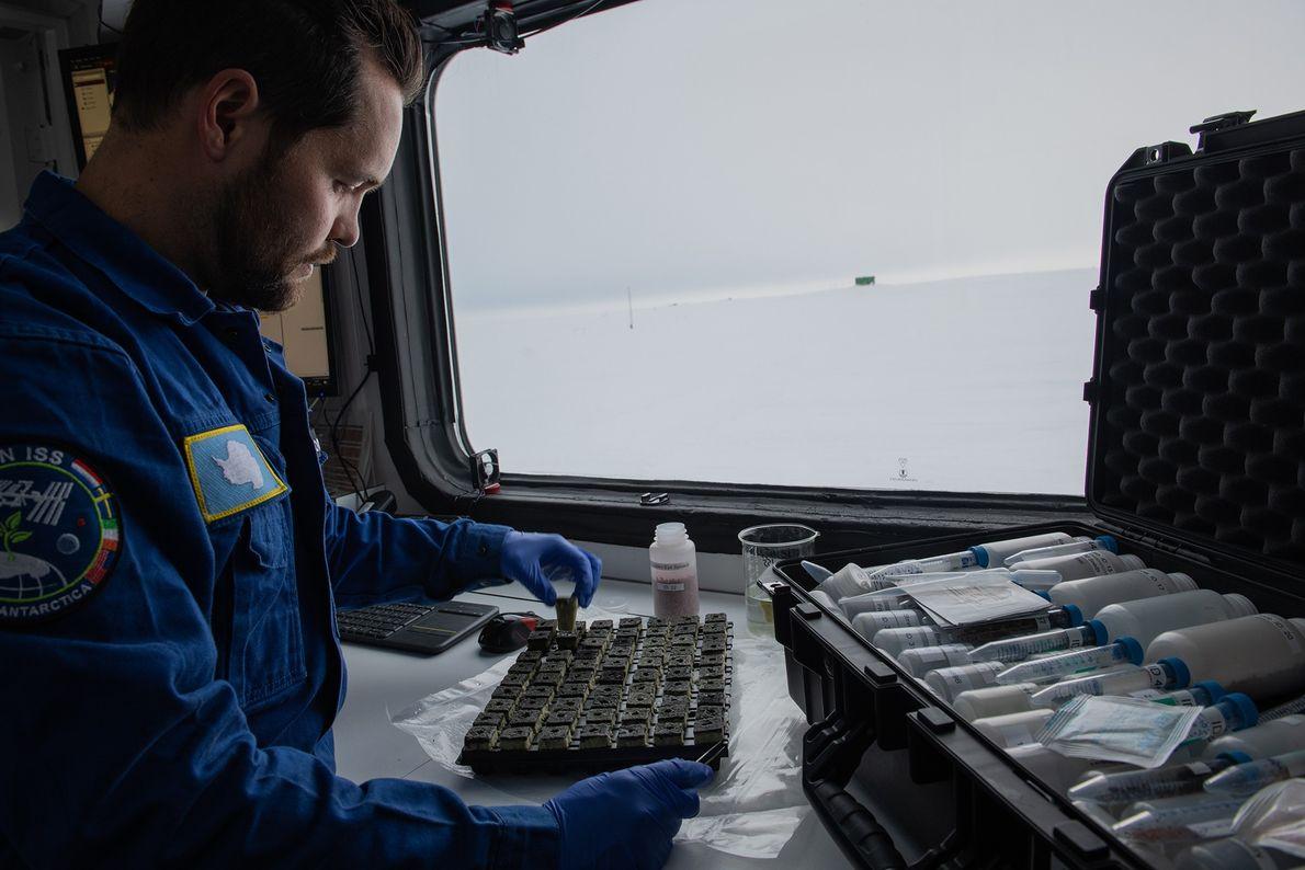 Markus Dorn, el ingeniero de horticultura del invernadero,prepara cubos de lana de roca para sembrar.