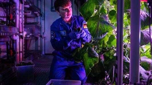 ¿Quieres cultivar vegetales en el espacio? Descubre cómo hacerlo en un laboratorio de la Antártida