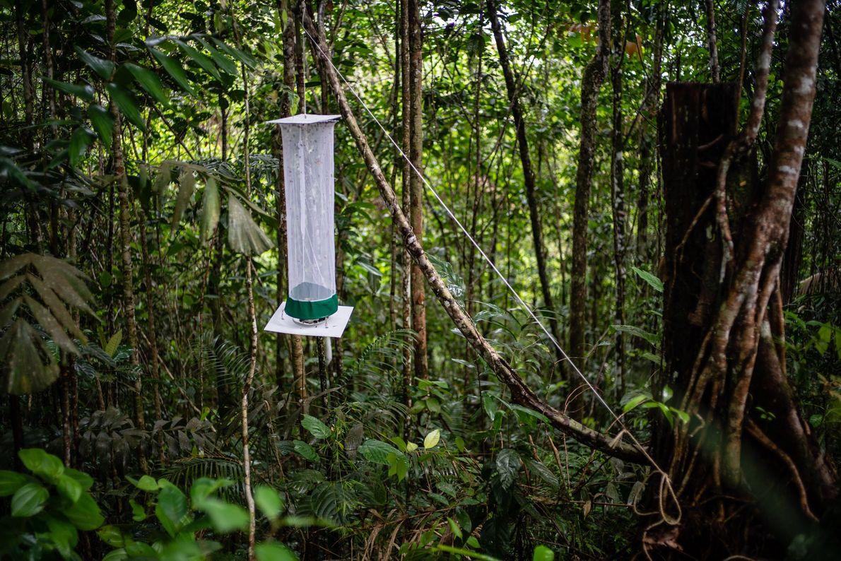 Los científicos usan trampas como esta para atrapar a las mariposas para su estudio.