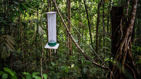 La selva colombiana se abre a la exploración I