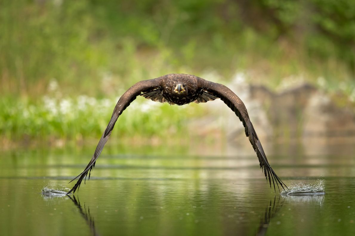 Volando bajo