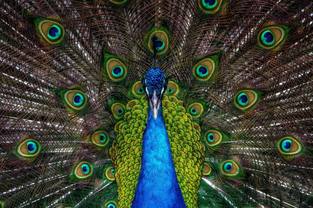 Exhibición de plumas