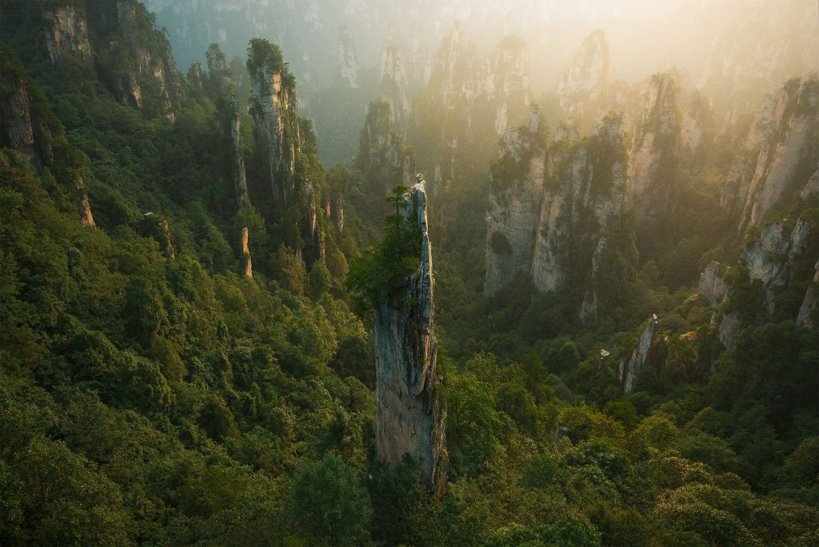 Torres del bosque
