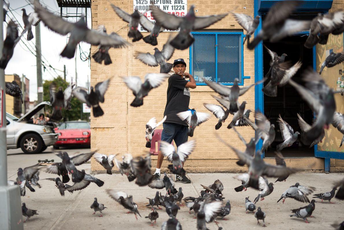 Entre aves