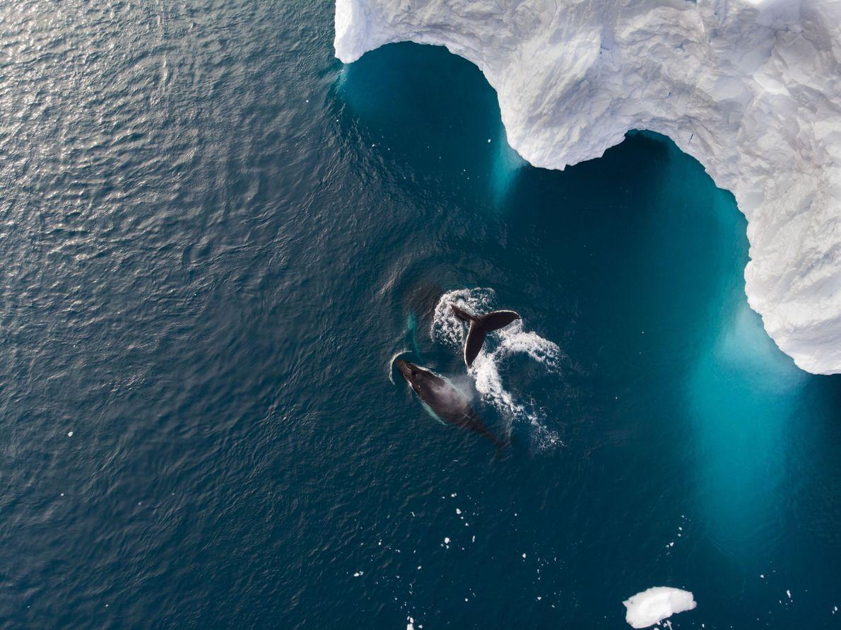 Nadar juntos