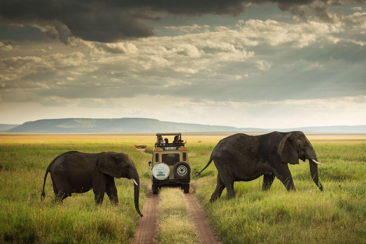 Safari en el Serengeti